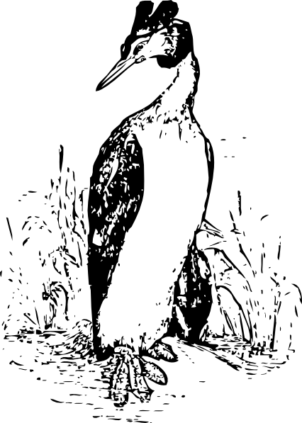 free vector The Grebe clip art