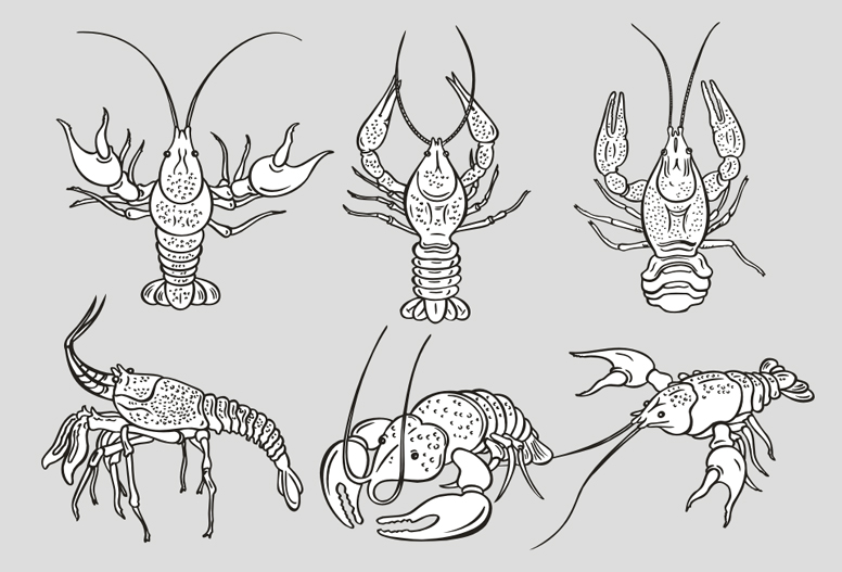 free vector The monochrome lobster vector