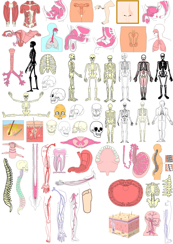 free vector The structure of human organ parts of vector