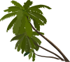 free vector Three Palm Trees clip art
