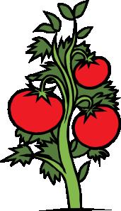 free vector Tomato Plant clip art