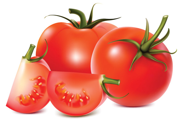 free vector Tomatoes vector