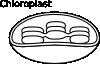 free vector Torisan Chloroplast clip art