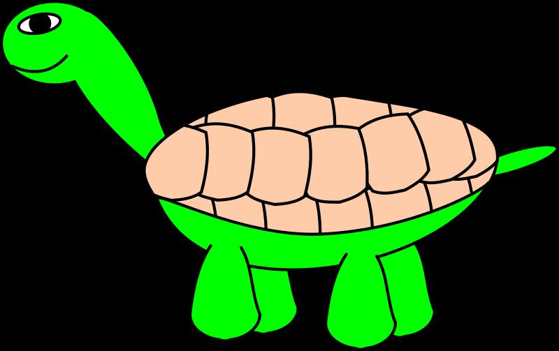 free vector TortoiseStage5