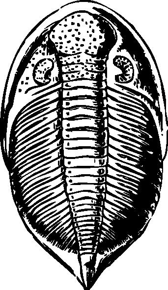 free vector Trilobite clip art