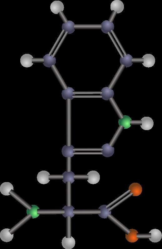 free vector Tryptophan (amino acid)