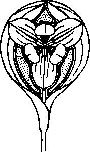 free vector Tulip Flower clip art
