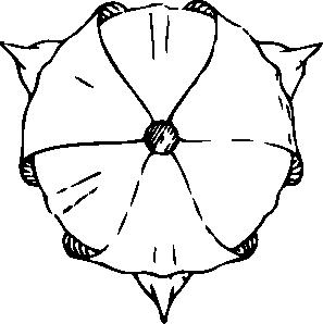 free vector Tulip Top View clip art