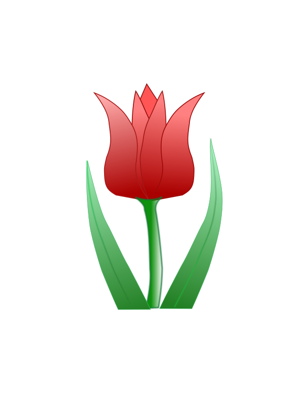 free vector Tulipa