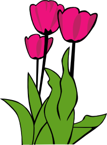 free vector Tulips In Bloom clip art