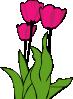 free vector Tulips In Bloom clip art