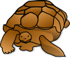 free vector Turtle_01 clip art