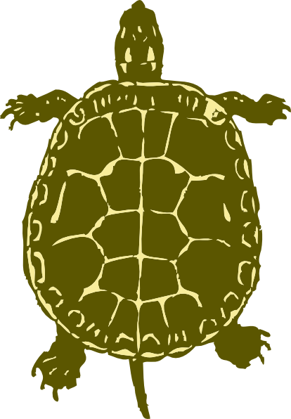 Turtle Shell Vector Turtle Clip Art is Free Vector