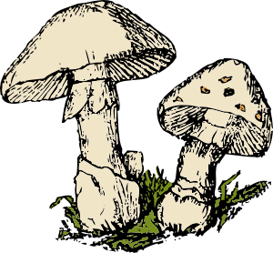 free vector Two Mushrooms clip art