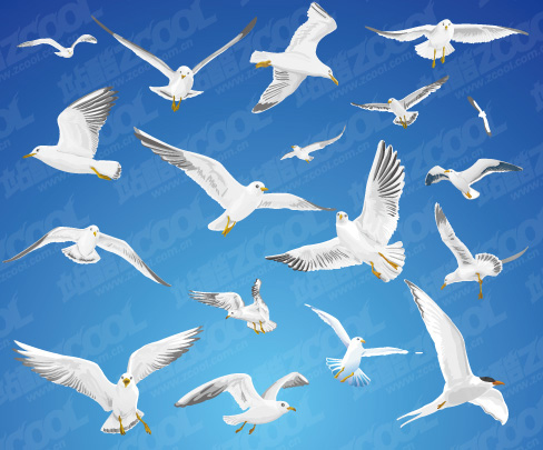 free vector Various movements of seagulls vector material