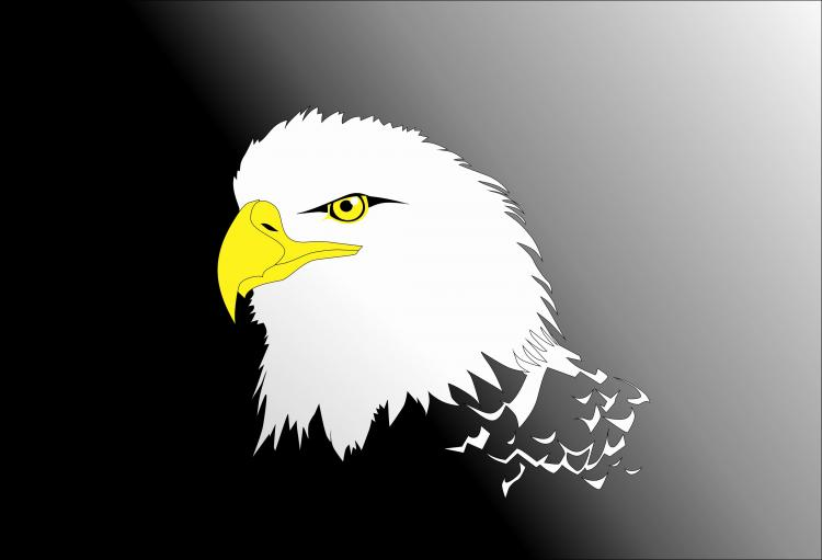 free vector Vector Eagle Head
