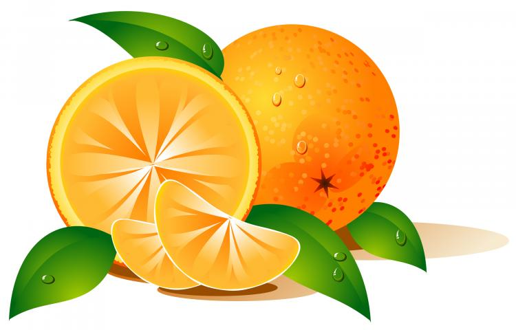 free vector  								Vector Fruits