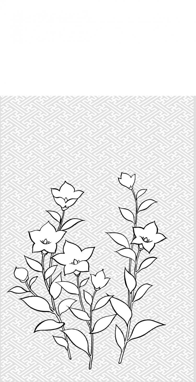 free vector Vector line drawing of flowers-28(Campanulaceae)