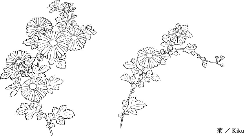 Line Art Flowers Vector : Vector line drawing of flowers chrysanthemum free