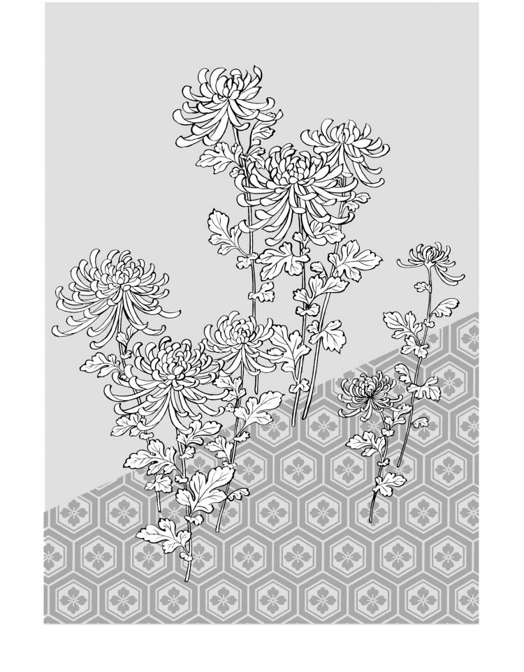 free vector Vector line drawing of flowers-39(Chrysanthemum, background)