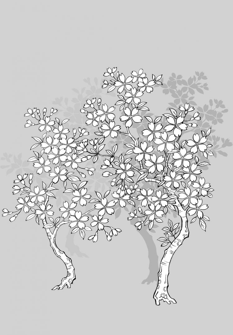 free vector Vector line drawing of flowers--41Cherry, classical background)