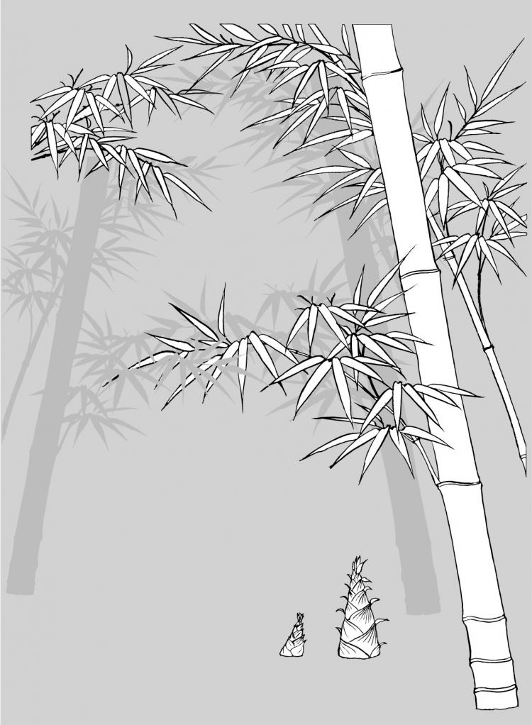 free vector Vector line drawing of flowers-49(Bamboo, bamboo shoots, Hok)