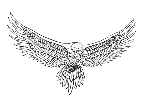 Line Drawing Vector Free : Vector line drawing of the eagle free