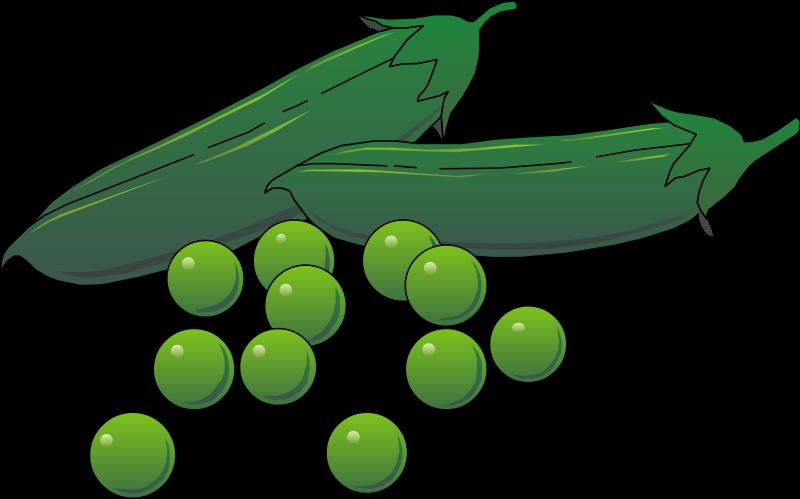 free vector Vegetables 02