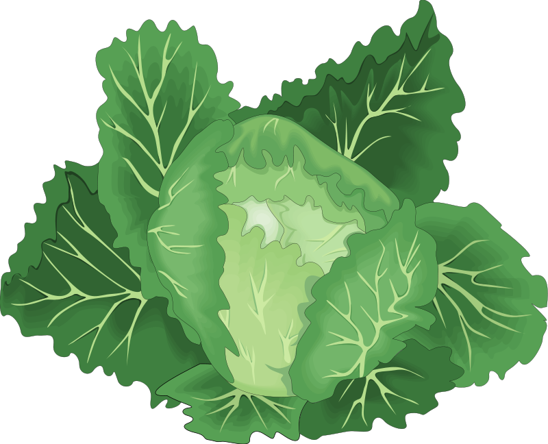 free vector Vegetables 25