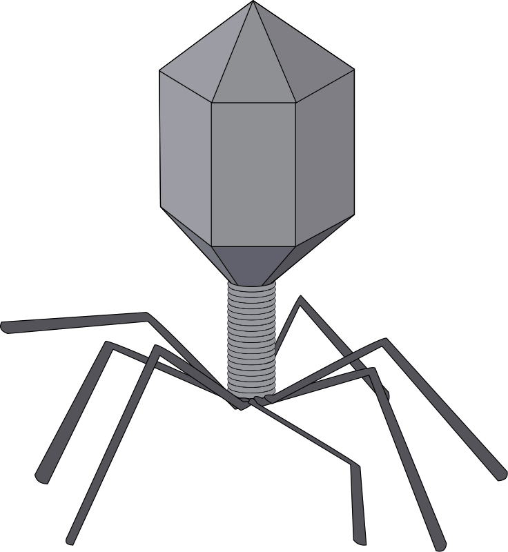 free vector Virus