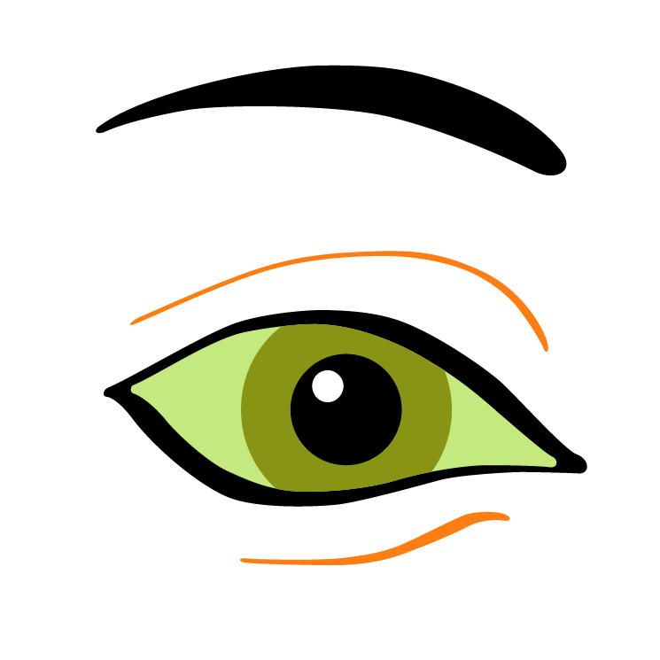 free vector Vision 2