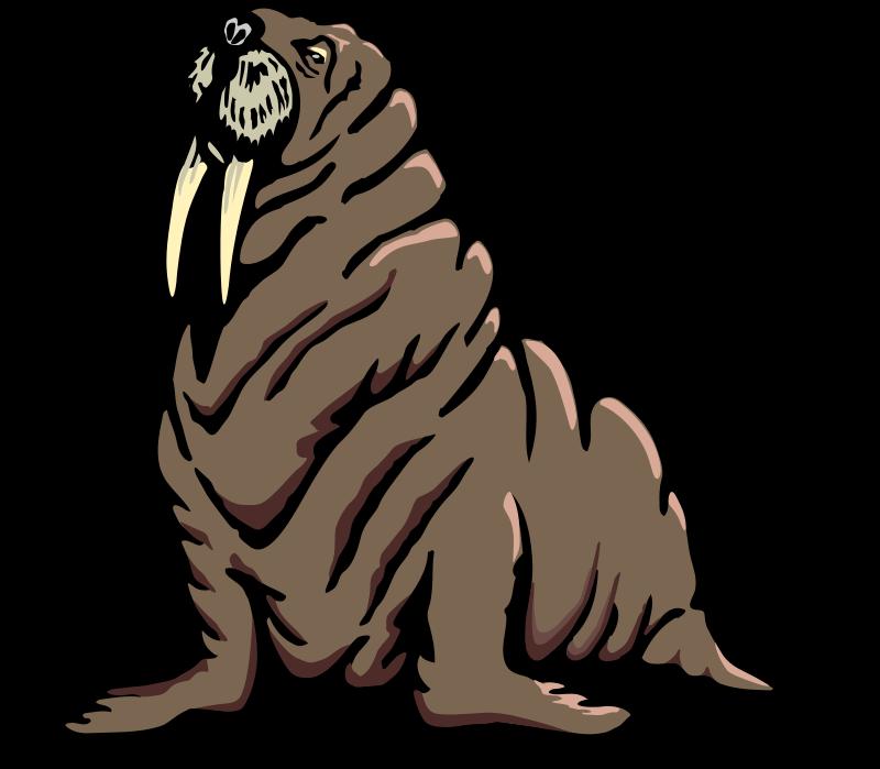 free vector Walrus 2