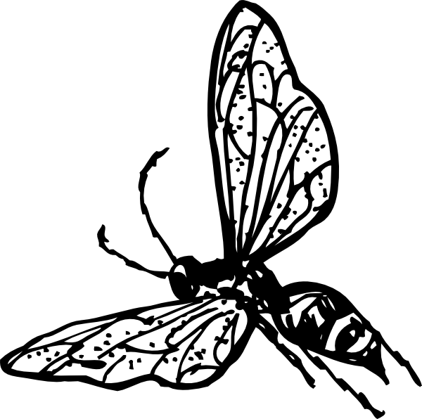 free vector Wasp clip art