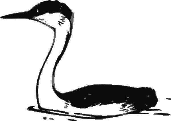 free vector Western Grebe clip art
