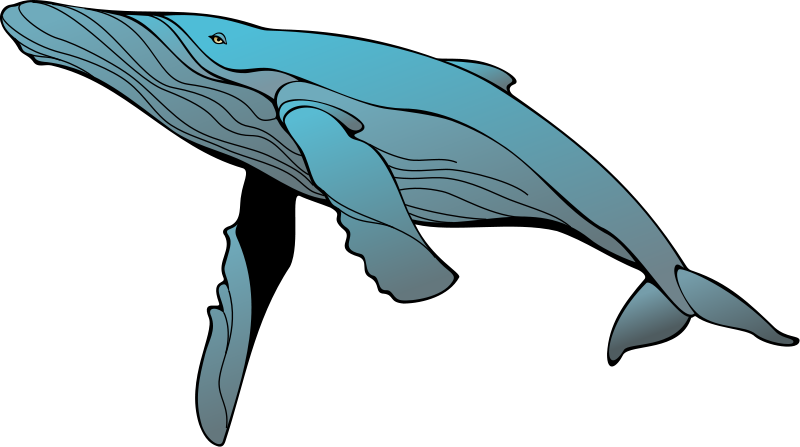 free vector Whale 2