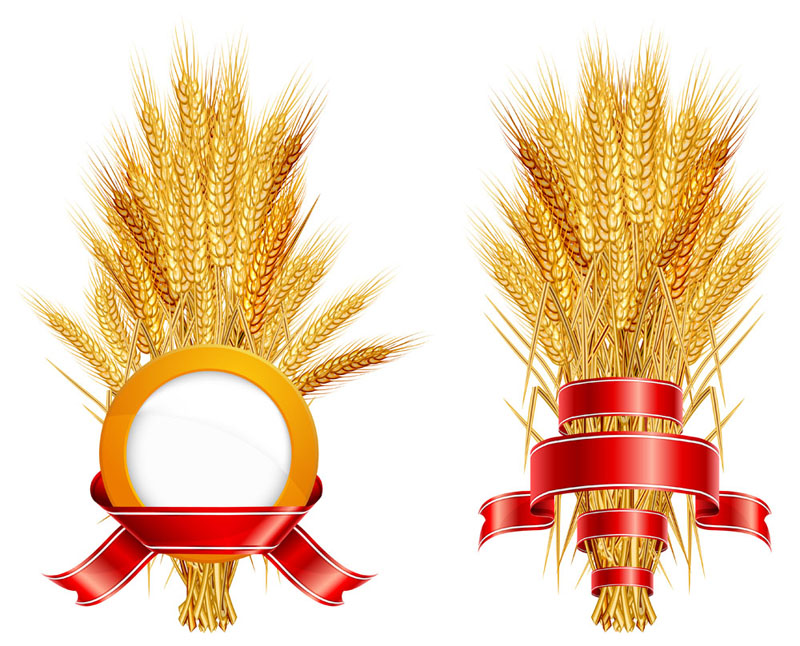 free vector Wheat 05 vector