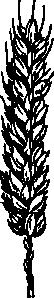 free vector Wheat clip art