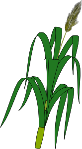 free vector Wheat Plant Food clip art