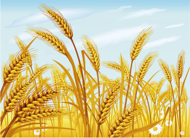 free vector Wheat vector