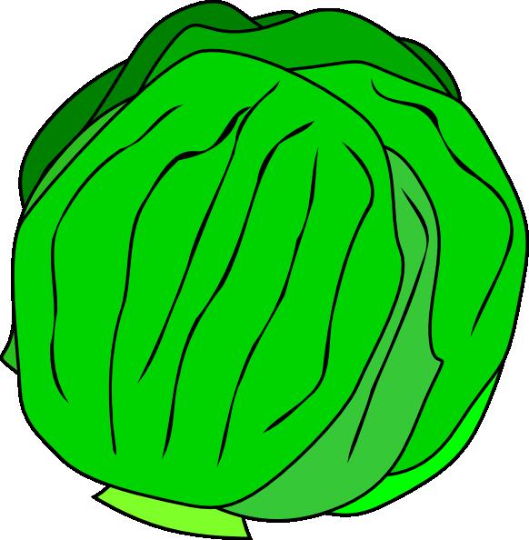 free vector Whole Lettuce clip art