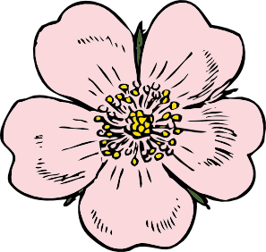 free vector Wild Rose clip art