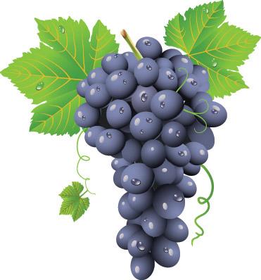 Grapes Vector Vector Art & Graphics   freevector.com