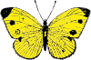 free vector Yellow Butterfly clip art