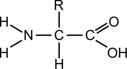 Amino acid (general)