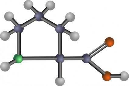 Proline (amino acid)