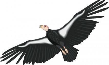Bird 31
