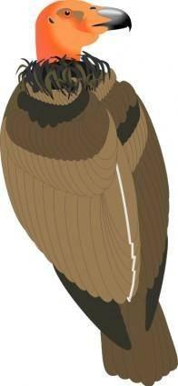 Bird 29