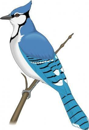free vector Bird 22