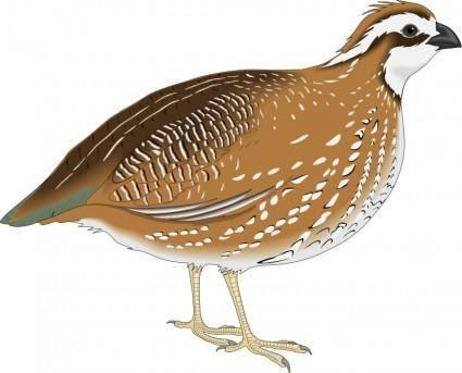 Bird 20