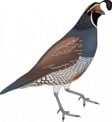 free vector Bird 15